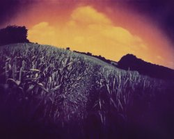 0673 - Corn field near Ratzenburg .