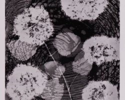 0975 - Black flowers -  Negative image