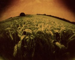 2000 - Wheat field 4