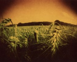 2001 - Wheat field 5